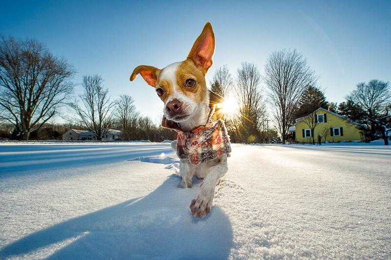 dog, passion project, pet, snow, time stevens,