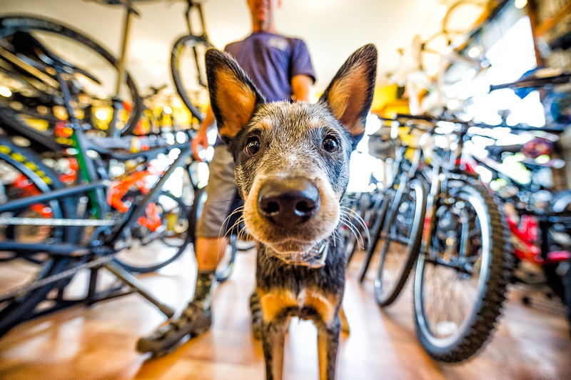 aaron-ingrao-portrait-dog-pet-brevard-the-hub-bike-shop-pisgah-tavern-henry