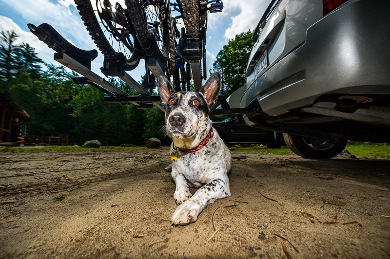aaron-Ingrao-lake-placid-whiteface-downhill-mountainbike-dude-dog